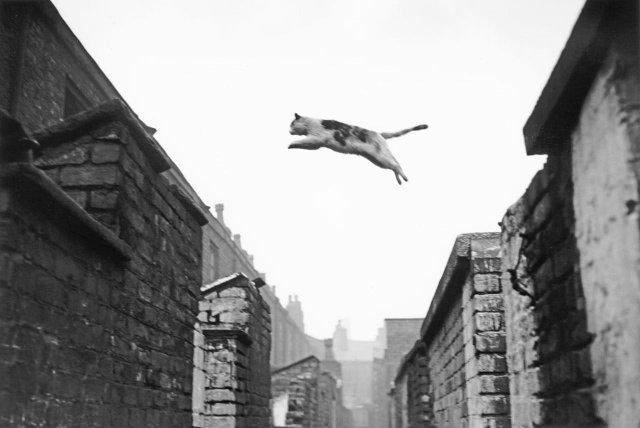 Пoлёт кота, Англия, 1957 год.