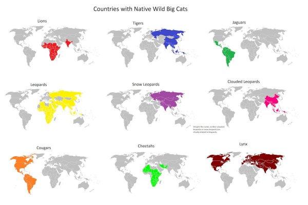 В каких регионах проживают разные виды крупных диких кошек