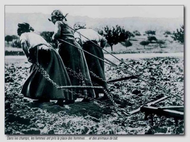 Лошади и мужики на войне, бабы пашут на себе, Франция, 1917 год.
