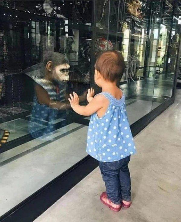 «Планета обезьян» в реальной жизни