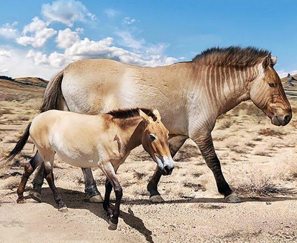 Лошадь Пржевальского и вымершая гигантская лошадь (Equus giganteus)
