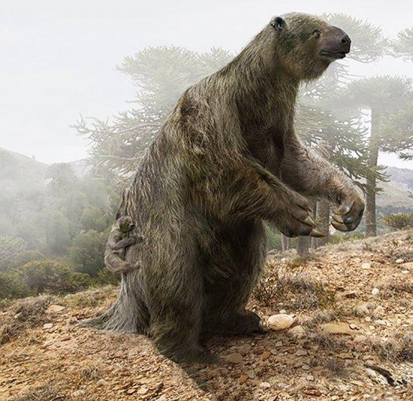 Двупалый ленивец и вымерший гигантский ленивец