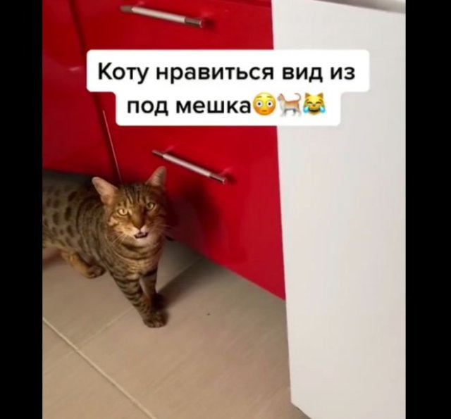 Очень странный кот