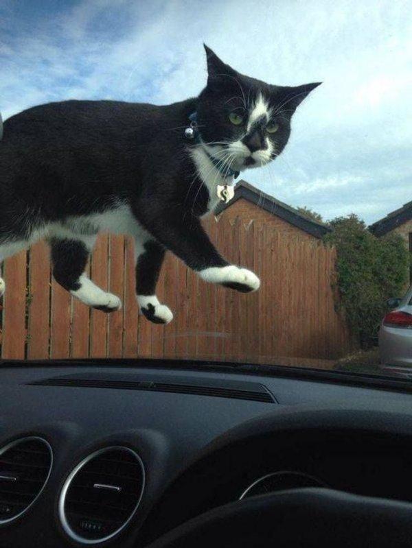 И снова коты нарушают законы физики