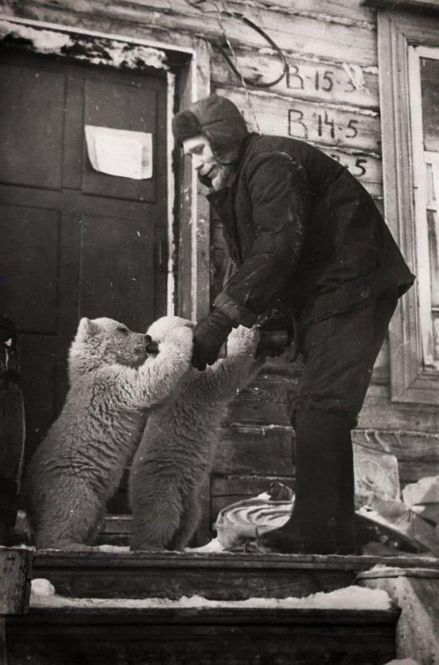Сотрудник метеостанции кормит осиротевших медвежат, Новая Земля, 1970 год.
