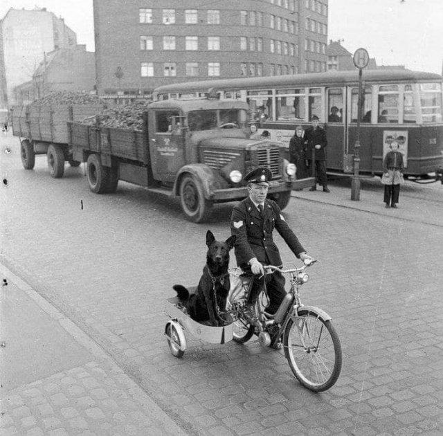 Сержaнт полиции Гамбурга Эрнст Мюллер и его собака едут на вызов, Германия, 1955 год.