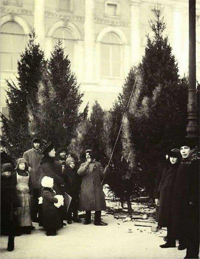 Елочный базар в Екатерининском саду Санкт-Петербург в 1913 году.