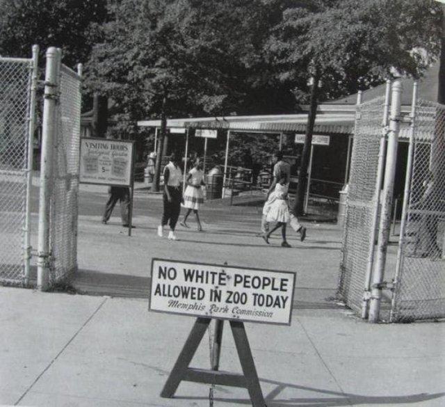 «Чёрный день» — день, в который в зоопарк Мемфиса ходят только люди определенной расы, 1959 год.
