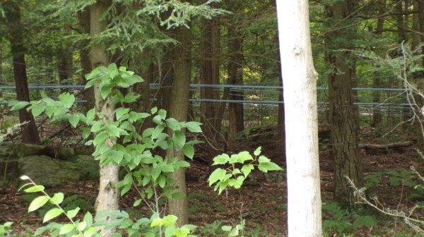 По лесу протянуты трубы. Для чего они?