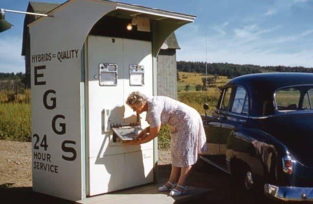 Автомат по продаже куриных яиц, 1955 год.