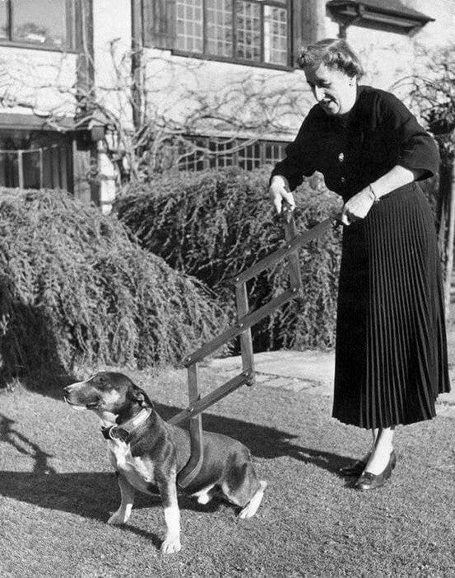 Собаколовка. Странное устройство приводило в ужас любителей животных, 1940 год.