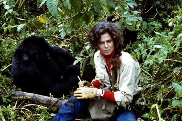 Сигурни Уивер училась «говорить на языке горилл» для фильма «Гориллы в тумане» (1988)