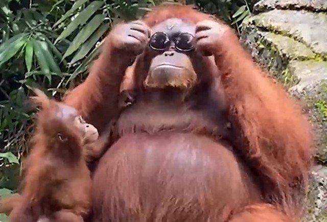"""Видео, покорившее мир: """"Самый стильный примат"""""""