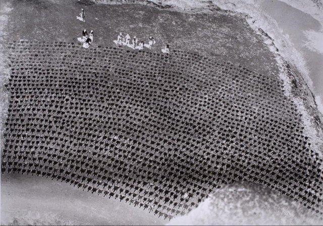 Сушка овечьих шкур. 1929 г.
