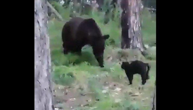 """""""Вася, успокойся"""": кот, который держит в страхе весь лес"""