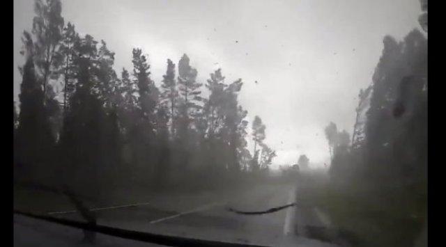 Красивые кадры из Белоруссии: китайские туристы попали в очень сильный ураган, роняющий деревья