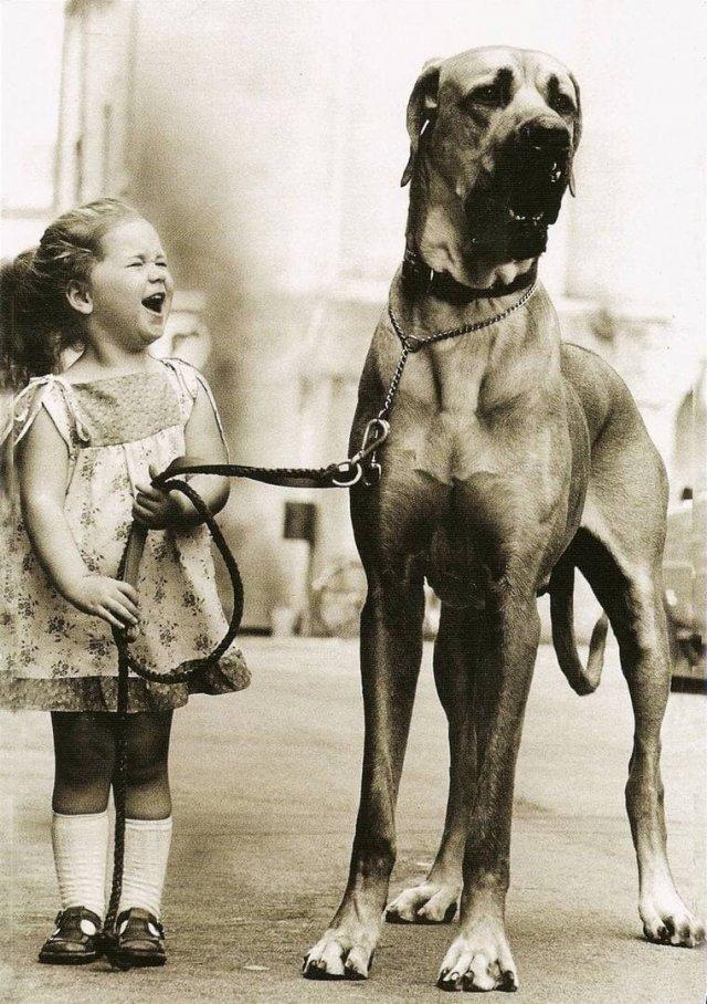 Счастливая маленькая дeвочка и ее большая coбака, 1950 гoд.