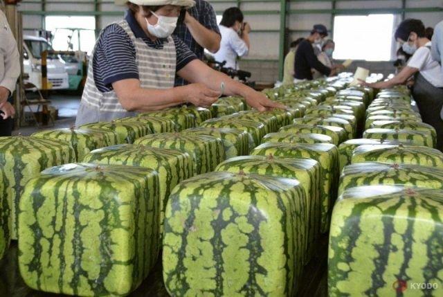 Кубические арбузы из Японии