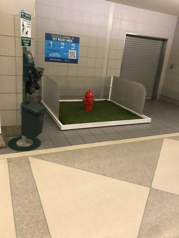 Специальное место, где собаки могут сходить в туалет