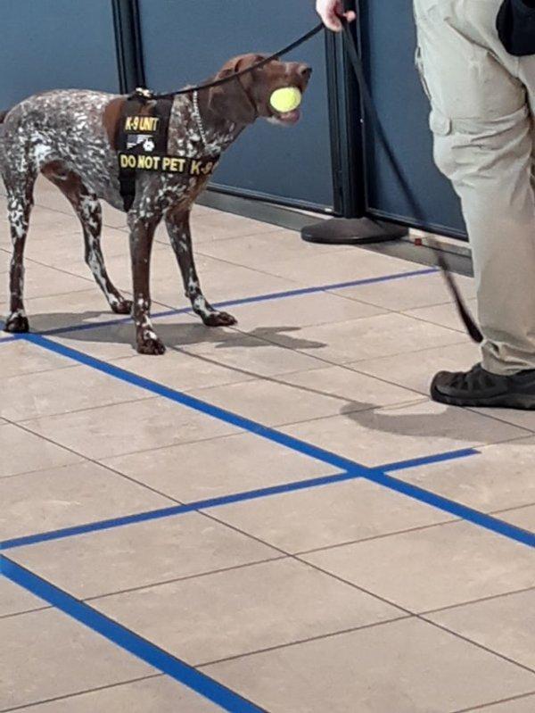 Собака, охраняющая аэропорт, «конфисковала» мячик кого-то из пассажиров и отказывалась отдать его обратно