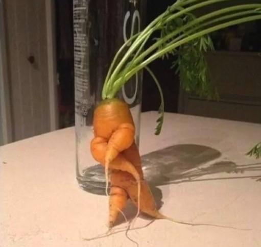 Кажется, эта морковка сейчас зачитает рэп