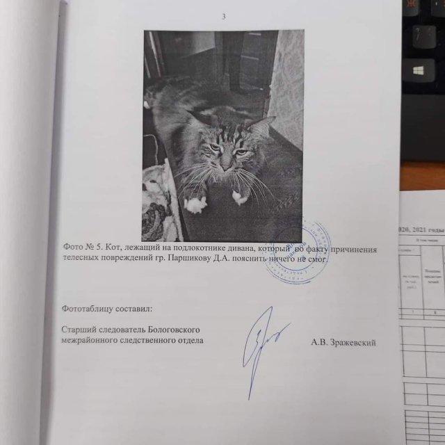 В Тверской области следователи опросили необычного свидетеля по уголовному делу, но он промолчал