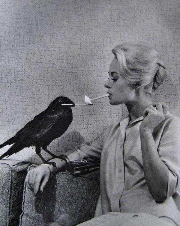 На съёмках фильма «Птицы»