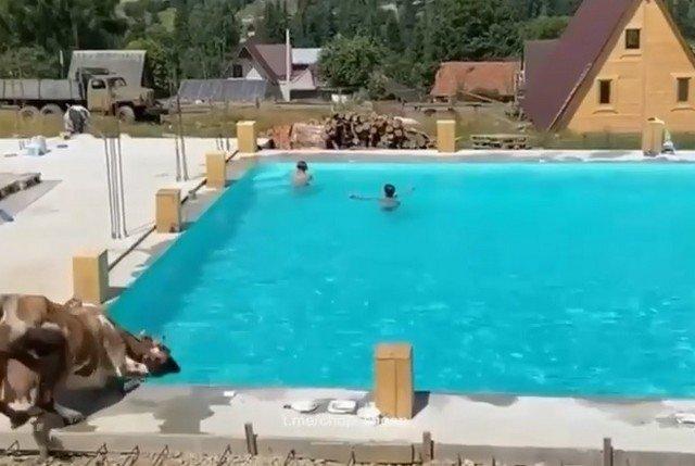 Необычный посетитель бассейна, который распугал всех жителей