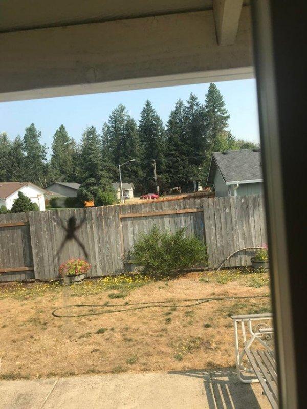 Гигантский паук на заборе