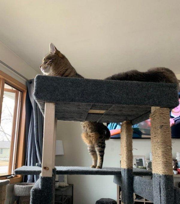Наш кот вдруг стал в два раза длиннее