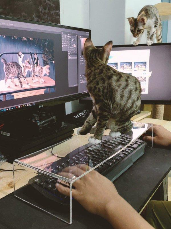 Защита клавиатуры от назойливого котика