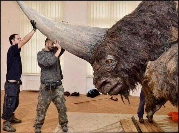 Это «сибирский единорог» — гигантский носорог