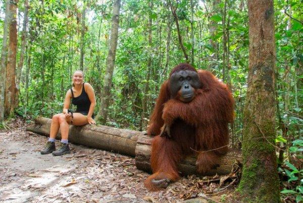 Размер орангутана