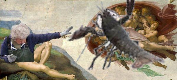 """""""Сотворение омара"""""""