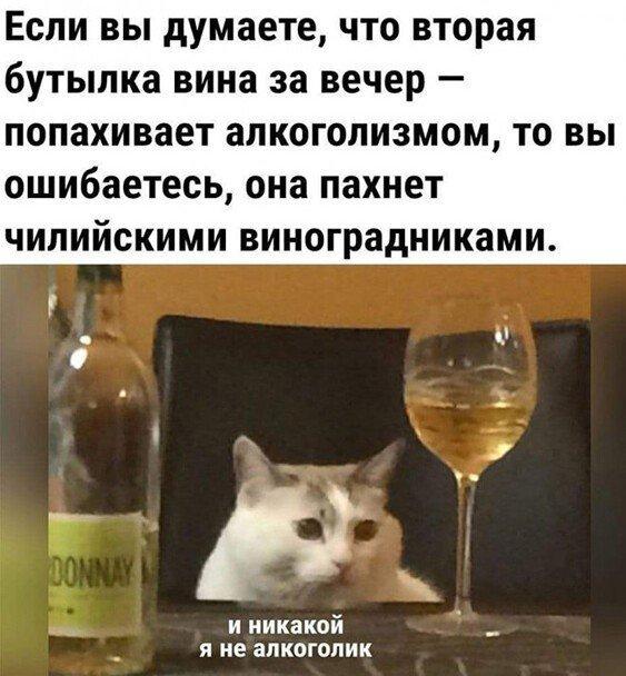 Шутки про алкоголь после прошедших выходных