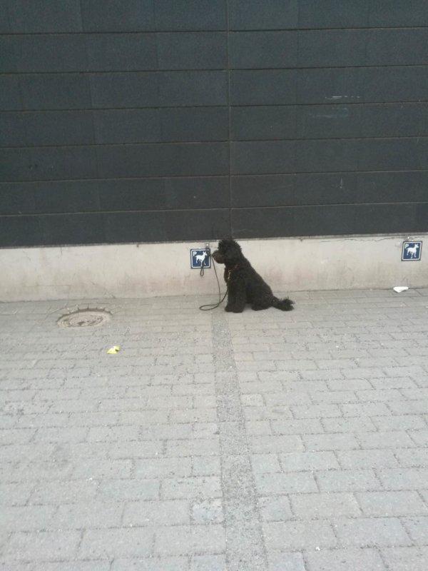 В Финляндии есть парковочные места для собак возле супермаркета