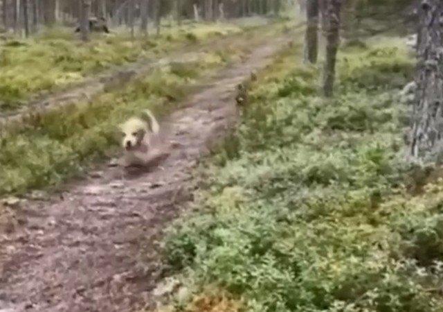 Главное на охоте - видеть цель