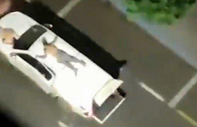 Банда грабителей в Бразилии привязала заложников к крышам машин, чтобы полиция не стреляла