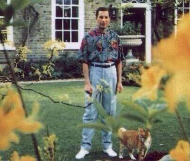 Последнее фото Фредди Меркьюри, 1991 год.