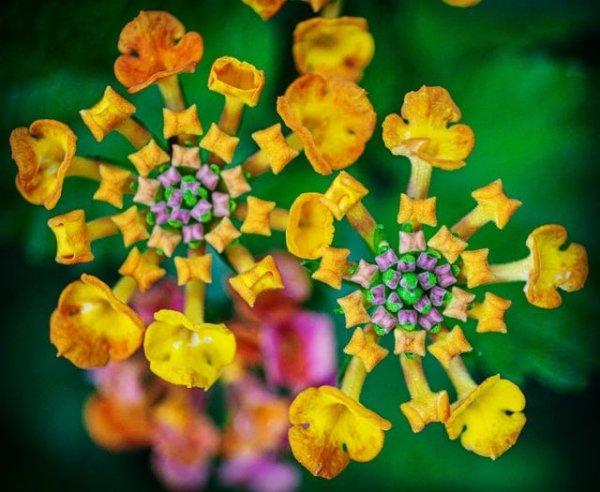 Крошечные цветы