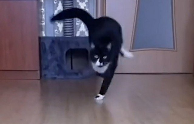 Неловкий котика Барик стал звездой TikTok: у него неизлечимое заболевание
