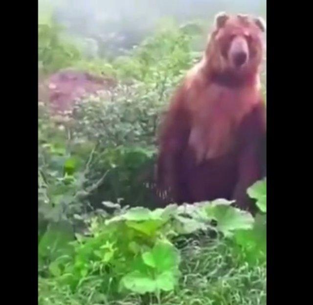 К грибникам вышел большой медведь