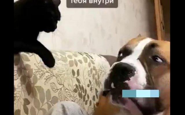"""Смешной пес """"высказывает"""" свое недовольство коту"""