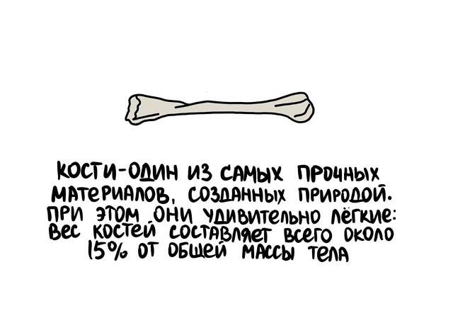 Интересные факты на все случаи жизни