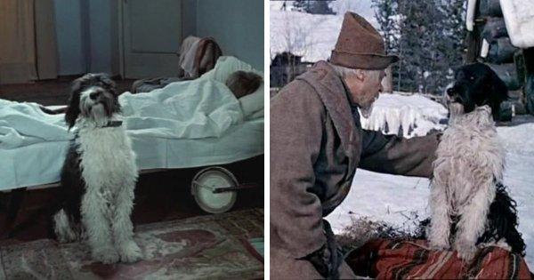 Пёс по кличке Дружок появлялся и в фильме «Сказка о потерянном времени», и в «Морозко»