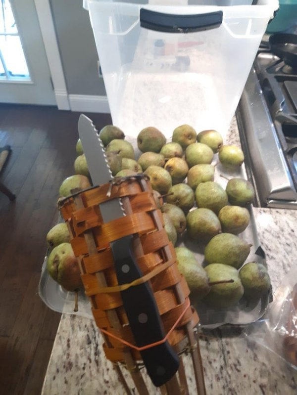 Как я решил срывать плоды, которые растут высоко на дереве