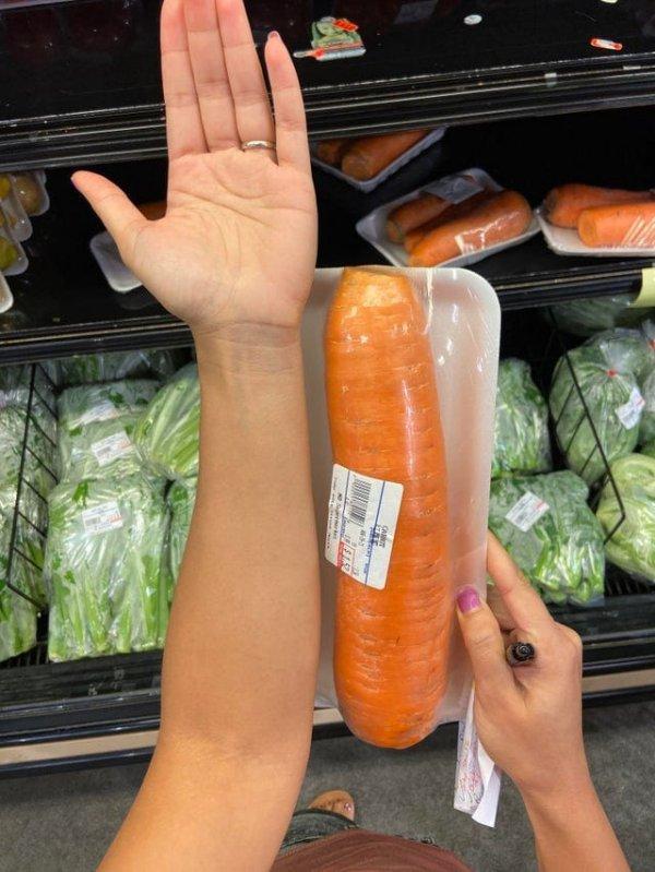 Огромная морковь в сравнении с рукой человека
