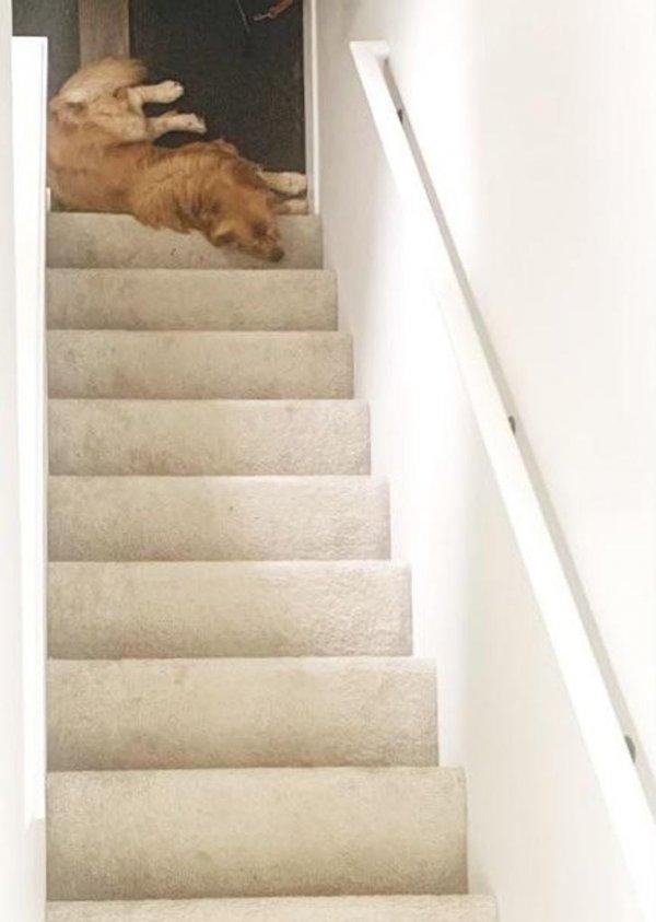 Сфотографировал свою собаку, и теперь никто не может понять — это верх лестницы или низ?