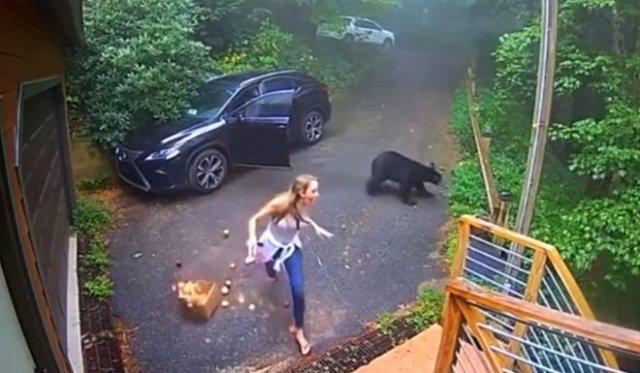 Девушку напугал медведь, который залез в машину