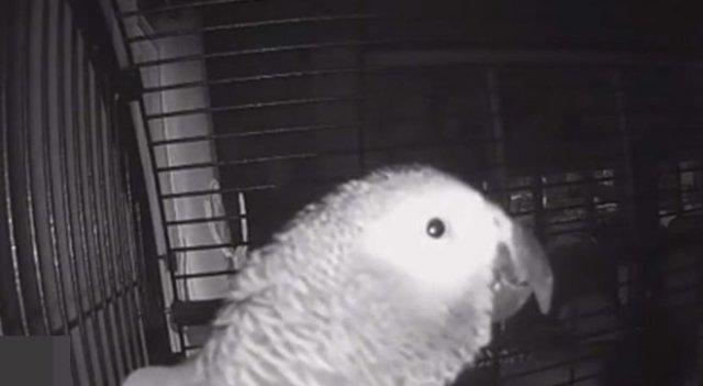 Умный попугай попросил голосового помощника добавить в список покупок тушенку